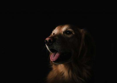 header-dog